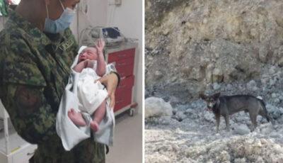 Bebeluș abandonat într-un depozit de deșeuri, salvat de un câine