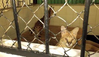 31 de animale noi au fost aduse la Grădina Zoologică din Chişinău, anunță primarul Ion Ceban