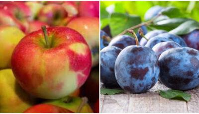 Producătorii de fructe de pe ambele maluri ale Nistrului vor accesa în comun noi piețe de desfacere în Uniunea Europeană