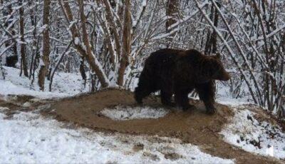 Imagini tulburătoare cu un urs care a fost ținut într-o cușcă la zoo timp de 20 de ani