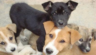 Persoanele care au animale de companie nesterilizate vor plăti taxe mai mari