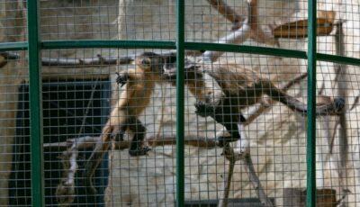 Viețuitoarele de la Grădina Zoologică s-au îmbolnăvit din cauza focurilor de artificii