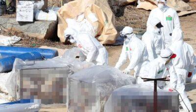 """OMS spune că riscul de răspândire la om a tulpinii de gripă aviară H5N8 detectată în Rusia ,,rămâne redus"""""""