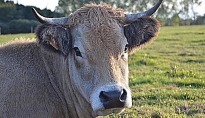 Vin geruri mari! Recomandările specialiștilor ANSA pentru îngrijirea animalelor în această perioadă