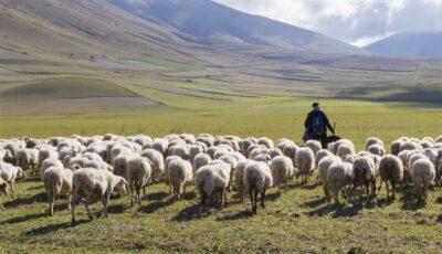Un tănăr cioban și-a făcut milioane de fani pe TikTok
