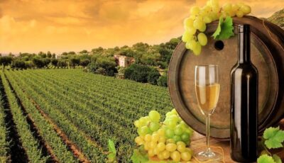 În anul 2020, vinurile Moldovei au obținut peste 950 de medalii la concursurile internaționale de profil