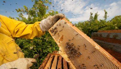 Mai mulți apicultori din țara noastră vor beneficia de granturi nerambursabile de 350 de mii dolari pentru a-și moderniza afacerile