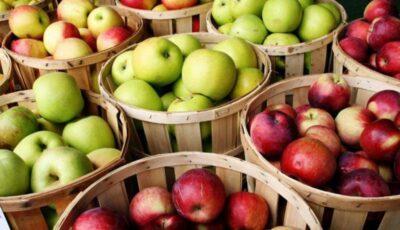 Rusia a interzis importul a peste 20 de tone de mere din Republica Moldova