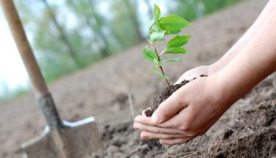 Peste 264.000 de copaci vor fi plantați în Moldova de Ziua Internațională a Pădurilor