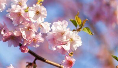 Astăzi s-a produs echinocţiul de primăvară, momentul care marchează începutul primăverii astronomice