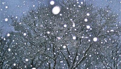 Ninge în nordul Moldovei
