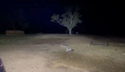 Australia se confruntă cu o invazie de şoareci. Imagini care îți dau fiori!
