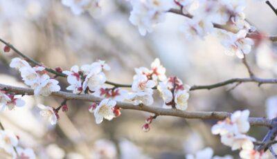 Fructe puține și scumpe, din cauza primăverii capricioase. Pierderile estimate de specialiști sunt și de 90%