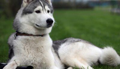 Deţinătorii de animale care nu vor strânge excrementele riscă amendă până la 1500 de lei