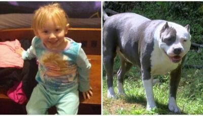 O fetiţă dispărută timp de 2 zile s-a întors nevătămată acasă. Patrupedul familiei a protejat-o zi şi noapte