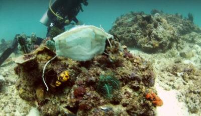 Imagini dezolante. Măștile sanitare ajung pe recifele de corali