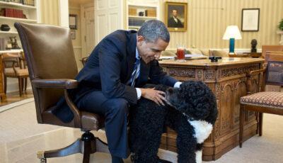 A murit Bo, câinele familiei Obama răpus de cancer, la vârsta de 13 ani