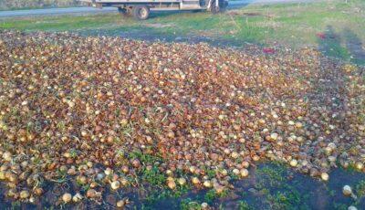 Un fermier moldovean a aruncat la gunoi tone de ceapă
