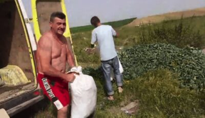 """Legumicultorii aruncă tone de castraveți. ,,I-am dona, dar nu vine nimeni să îi ia!"""""""