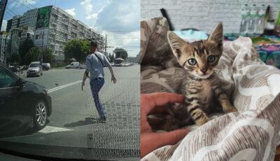 Un pui de pisică, salvat de către un tânăr într-o intersecție aglomerată din capitală