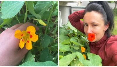 Nata Albot mănâncă flori, în salate. Care sunt florile comestibile pe care le-a descoperit