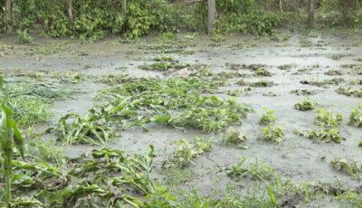 Peste 65 de hectare de culturi agricole din Ungheni, distruse de ploi și grindină