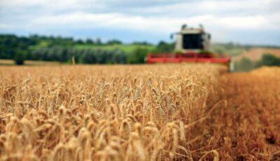Recoltă bogată de cereale în acest an. Agricultorii sunt încântați