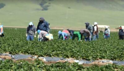 Moldovence luate în robie la munci agricole. Doi conaționali, din Italia, reținuți