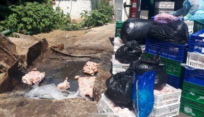Circa 1.600 kg de carne infestată cu bacteria Salmonella, depistată la un agent economic din Bălți