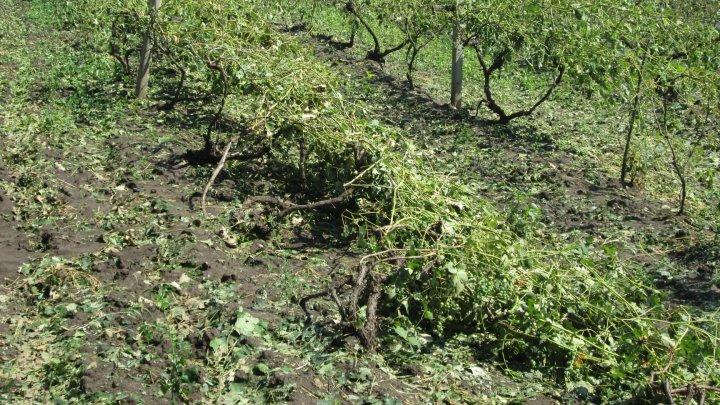 Furtuna de luni seara a făcut prăpăd în unele raioane ale ţării