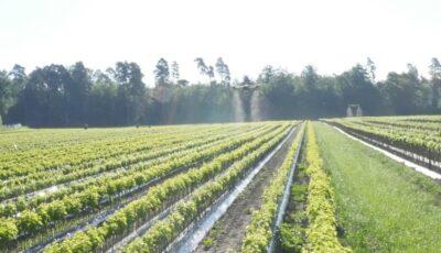Drona, tehnologia digitală care le vine în ajutor şi agricultorilor
