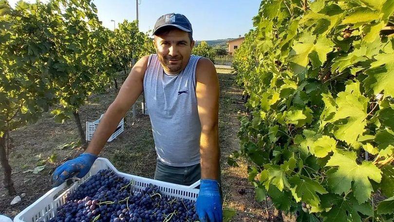 Foto: Un primar din Căușeni lucrează în Italia în timpul concediului