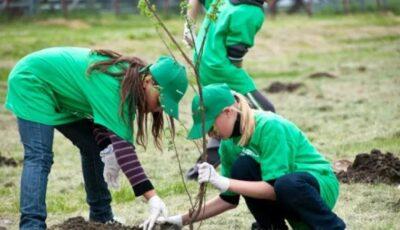 Pe 13 noiembrie, va fi lansată campania națională de plantare a copacilor