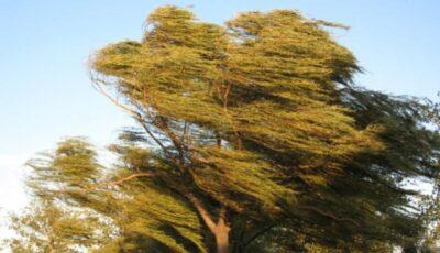 Alertă meteo! Cod galben de vânt puternic în Moldova