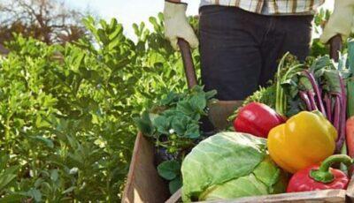 Cehia susţine dezvoltarea agriculturii ecologice în Republica Moldova
