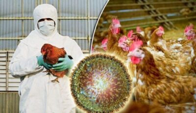 În China, cresc cazurile de gripă aviară la om. Potrivit experților, virusul este mai contagios
