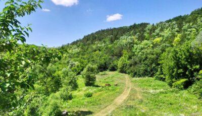 Ministerul Mediului îşi propune împădurirea teritoriului Moldovei până la 25%