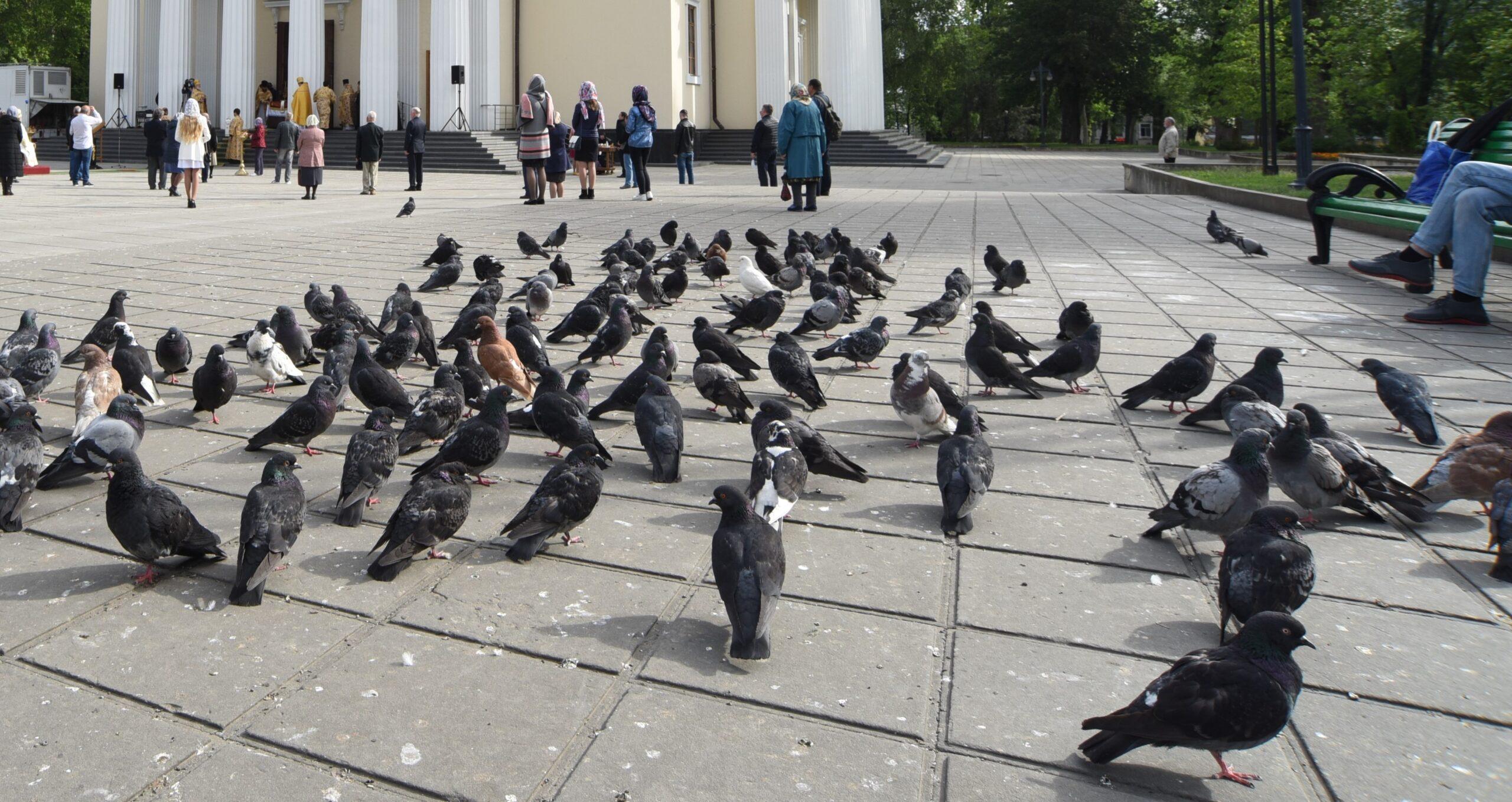 Foto: Porumbeii au început să se îmbolnăvească și pot reprezenta un pericol pentru oameni. Avertismentul specialiștilor