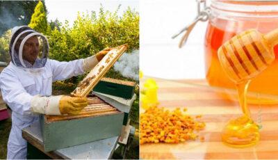 Încă șase producători moldoveni vor putea exporta miere ecologică