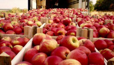 Rusia ar putea refuza complet importul de mere din Moldova
