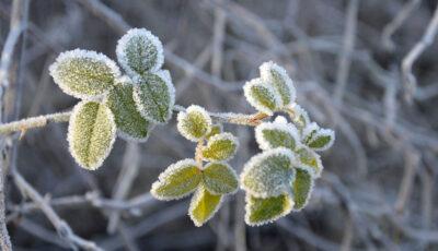 Alertă meteo. Cod Galben de înghețuri în Moldova
