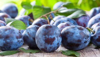 Moldova a depășit cota de 15 mii de tone la exportul prunelor în Uniunea Europeană
