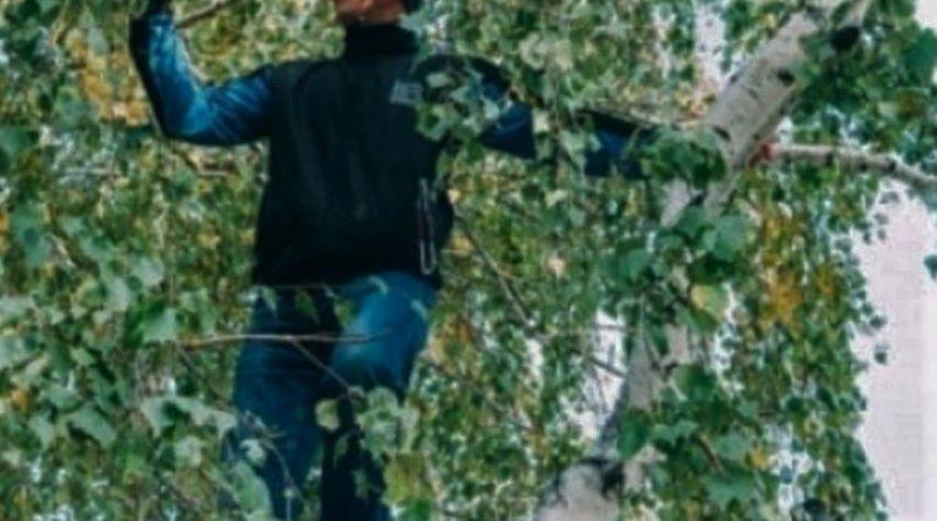 Foto: Vulcănești: Un bărbat de 54 de ani a murit după ce a căzut dintr-un copac